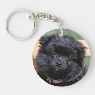 Black Pomeranian Puppy Double-Sided Round Acrylic Key Ring