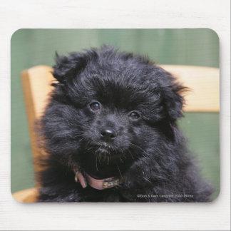 Black Pomeranian Puppy Mouse Mat