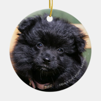 Black Pomeranian Puppy Round Ceramic Decoration