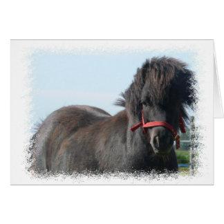 Black Pony Greeting Card
