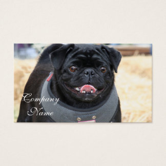 Black Pug Business Cards