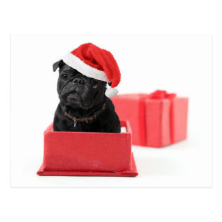 Black pug dog present or gift postcard