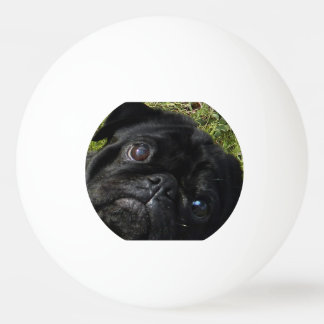 black-pug eyes.png ping pong ball