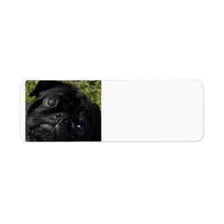 black-pug eyes.png return address label