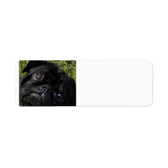 black-pug eyes.png return address label