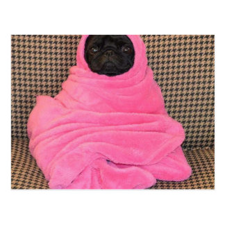 Black Pug in A Pink Blanket Postcard