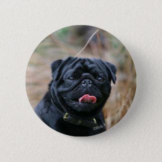 Black Pug Panting While Looking at Camera 6 Cm Round Badge