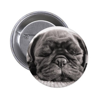 Black pug pinback buttons