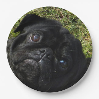 black-pug.png 9 inch paper plate