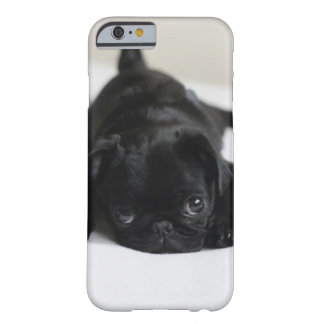 Black Pug Puppy Barely There iPhone 6 Case
