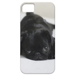 Black Pug Puppy Case For The iPhone 5