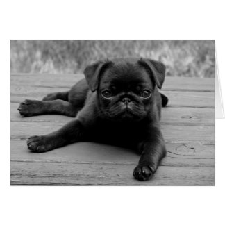 Black Pug Puppy Dog Blank Note Card