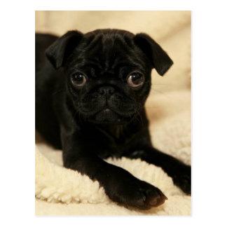 Black Pug Puppy Postcard
