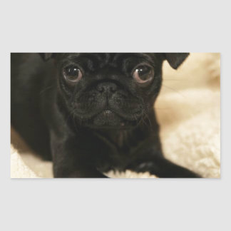 Black Pug Puppy Rectangular Sticker