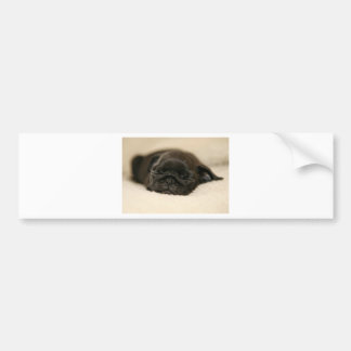 Black Pug Puppy Sleeping Bumper Sticker
