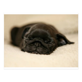 Black Pug Puppy Sleeping Postcard
