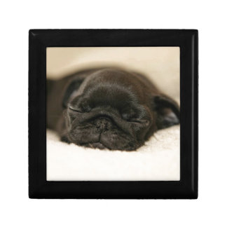 Black Pug Puppy Sleeping Small Square Gift Box