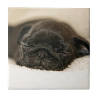 Black Pug Puppy Sleeping Tile