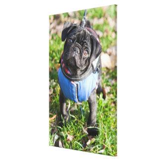 Black Pug Puppy Wearing A Jacket Canvas Print