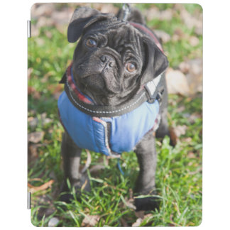 Black Pug Puppy Wearing A Jacket iPad Smart Cover