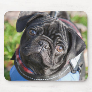Black Pug Puppy Wearing A Jacket Mouse Mat