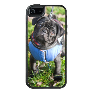 Black Pug Puppy Wearing A Jacket OtterBox iPhone 5/5s/SE Case