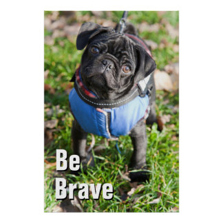 Black Pug Puppy Wearing A Jacket Poster