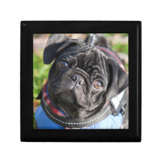 Black Pug Puppy Wearing A Jacket Small Square Gift Box