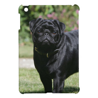 Black Pug Standing Looking at Camera Cover For The iPad Mini
