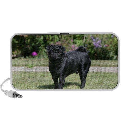 Black Pug Standing Looking at Camera iPhone Speaker
