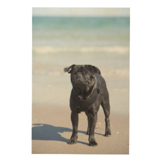 Black Pug Standing On The Beach Wood Wall Decor