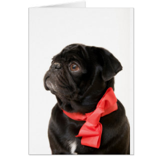 Black pug  with red bow greeting card