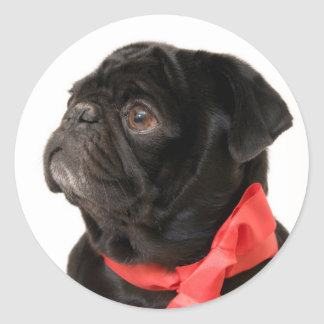 Black pug  with red bow round sticker