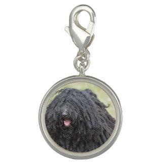 Black Puli Dog