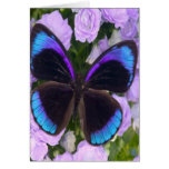 Black, Purple and Blue Butterfly Greeting Card