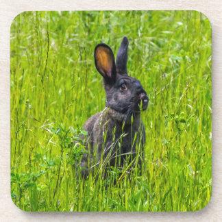 Black rabbit in the grass hard plastic coasters