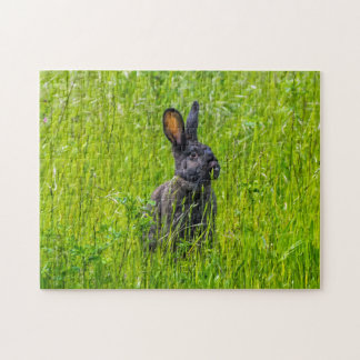 Black rabbit in the grass photo puzzle