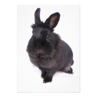 black rabbit invitation