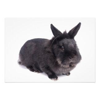 black rabbit announcement