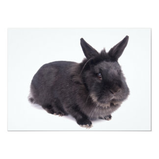 black rabbit 13 cm x 18 cm invitation card