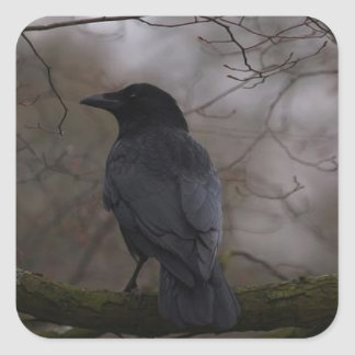 Black Raven Square Sticker