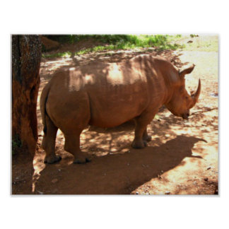 Black Rhino African Home Decor Poster