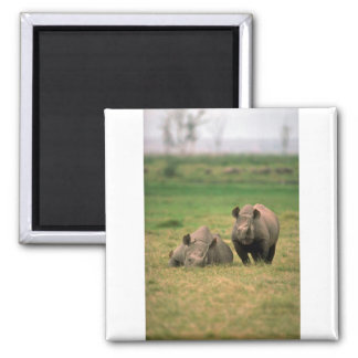 Black Rhino - Mother With Large Calf Square Magnet