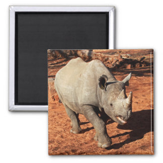Black Rhino Portrait Magnet