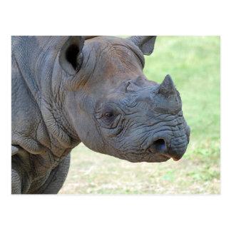 Black Rhino Postcard