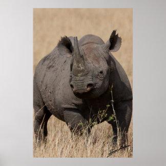 Black Rhino Stare-Down Poster