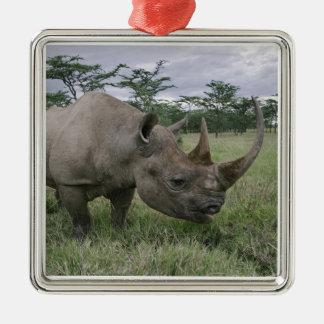 Black Rhinoceros, Diceros bicornis, Kenya 2 Christmas Ornament
