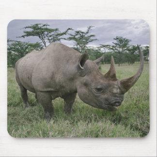 Black Rhinoceros, Diceros bicornis, Kenya 2 Mouse Mat