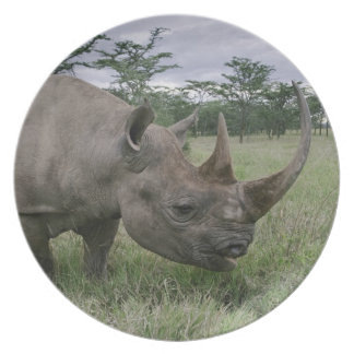 Black Rhinoceros, Diceros bicornis, Kenya 2 Plate