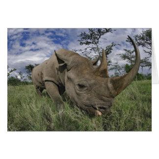 Black Rhinoceros, Diceros bicornis, Kenya Card